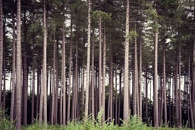 Photograph - Tree Trunks by Svetlana Sewell