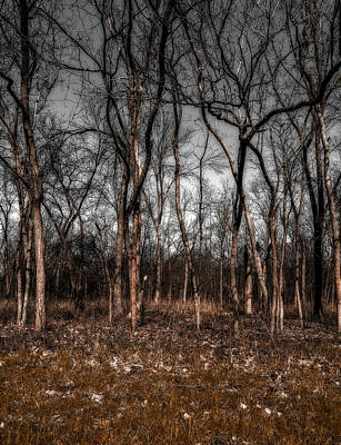 Photograph - Trees by Peter Lakomy