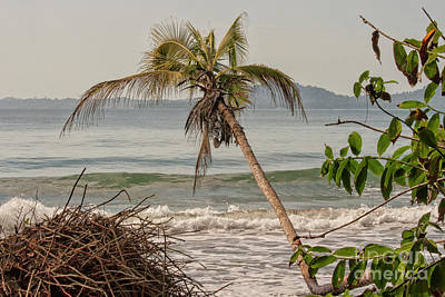 Photograph - Tropical Beach by Patricia Hofmeester