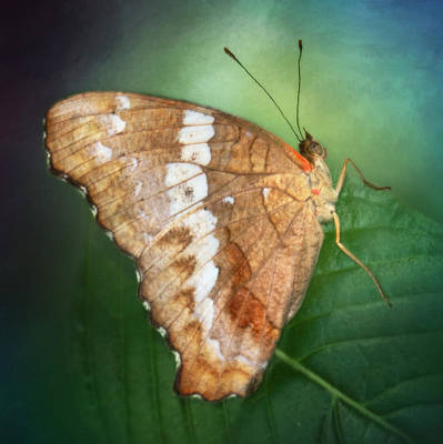 Photograph - Tropical Butterfly by David and Carol Kelly