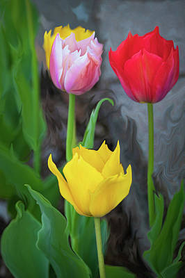 Digital Art - Tulips by Cristina Stefan