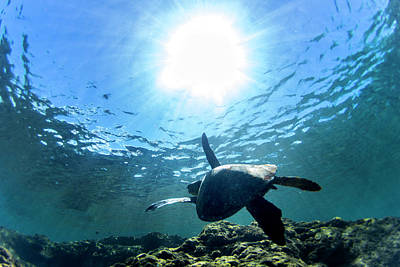 Hawaii Sea Turtle Photograph - Turtles View by Sean Davey