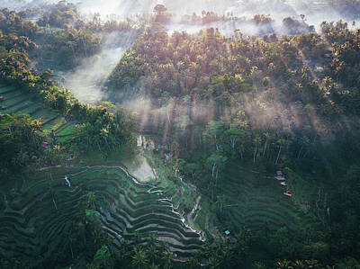 Photograph - Ubud Rice Terrace by Evgeny Vasenev