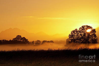 Michael Jackson - Valley fog with silhouetted trees  by Jim Corwin