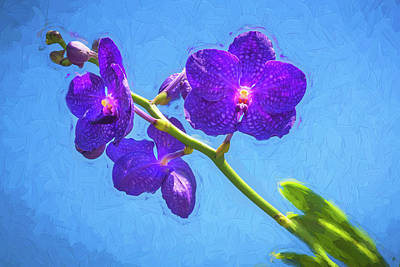 Photograph - Vanda Orchids Pachara Delight by Rich Franco
