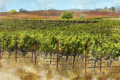 Photograph - Vineyard In Napa Valley California In Autumn by Brandon Bourdages