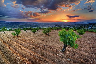 Colorfull Photograph - Vineyards At Sunset by Guido Montanes Castillo