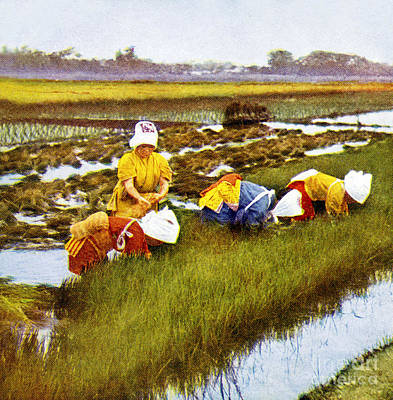 Asian Workers Painting - Vintage Japanese Art by Hawaiian Legacy Archive - Printscapes