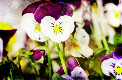 Photograph - Viola by Martina Fagan