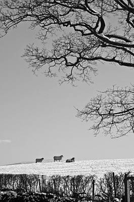 Photograph - Waiting For Spring Black And White by David Birchall