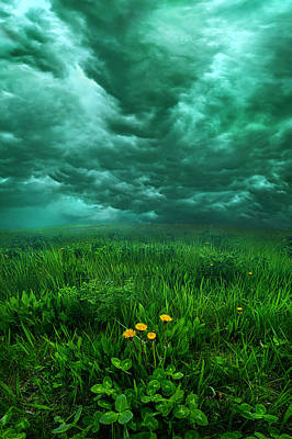 Photograph - Waiting by Phil Koch