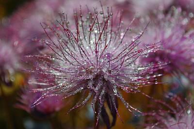 Nature Digital Art - Water Drop by Maye Loeser
