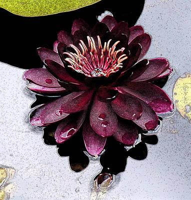 Lilies Digital Art - Water Lily by Susan Fernandez