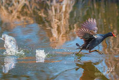 Photograph - Water Runner by Jivko Nakev