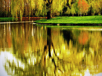 Photograph - Weeping Willow Tree by Carol F Austin