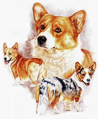 Drawing - Welsh Corgi by Barbara Keith