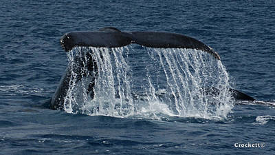 Photograph - Whale Tail by Gary Crockett