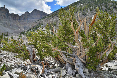Photograph - Wheeler Peak Basin by Ray Mathis