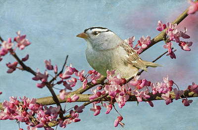 Photograph - White-crowned Sparrow by Angie Vogel