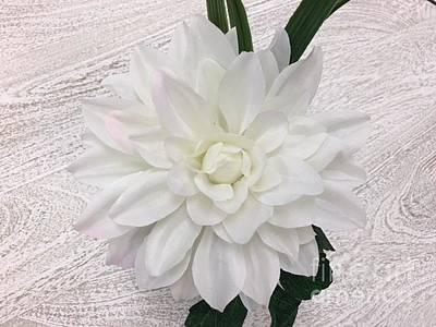 Photograph - White Dahlia by Jeannie Rhode