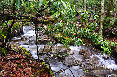 Trout Stream Photograph - White Oak Run In Spring by Thomas R Fletcher