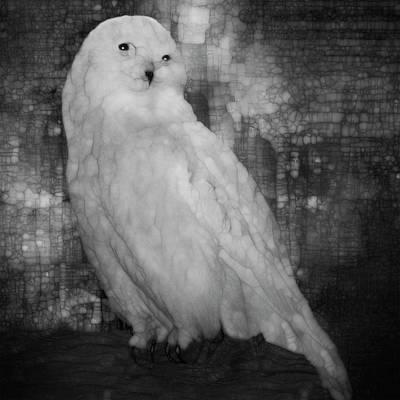 Night Hawk Wall Art - Painting - White Owl by Jack Zulli