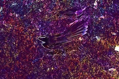 Flycatcher Digital Art - White Throated Fantail Flycatcher  by PixBreak Art