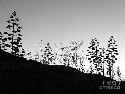 Photograph - Wild Flora In Silhouette by Mary Attard