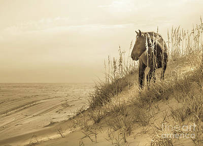 Photograph - Wild Horse On The Beach by Diane Diederich