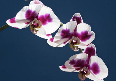 Keith Richards - Wild Orchid Flower by Elisabetta Poggi