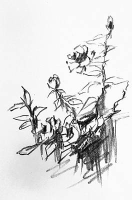 Drawing - Wild Roses by Hae Kim