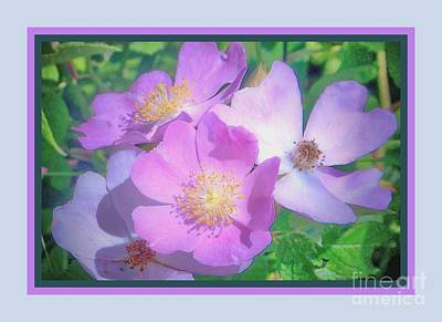 Photograph - Wild Roses by Shirley Moravec