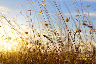 Cereal Photograph - Wild Spikes by Carlos Caetano