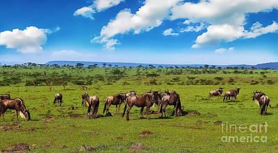 Genus Digital Art - Wildebeest by Charuhas Images