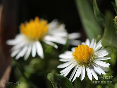 Photograph - Wildflower Named White Panicle Aster by J McCombie