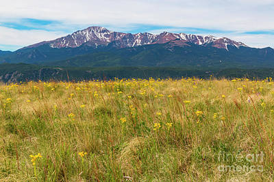 Steven Krull Photos - Wildflowers and Pikes Peak by Steven Krull