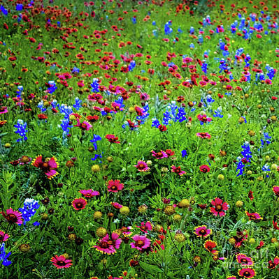 Art Print featuring the photograph Wildflowers In Bloom by D Davila
