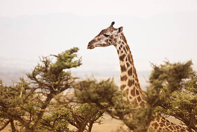 Giraffe Wall Art - Photograph - Wildlife by Vanessa Gavalya