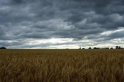 Photograph - Willamette Wheat by Steven Clark