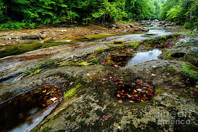 Photograph - Williams River In The Rain by Thomas R Fletcher