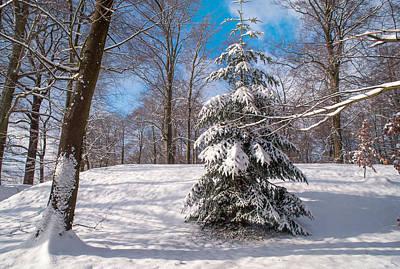 Winter Delight Art Print by Jenny Rainbow