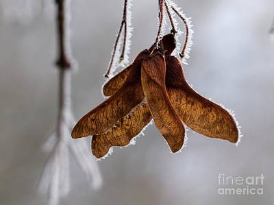 Photograph - Winter Impressions by Katerina Vodrazkova