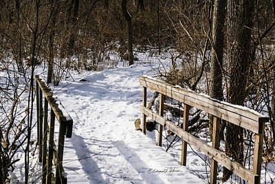 Photograph - Winter Path by Edward Peterson