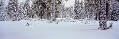 Snow-covered Landscape Photograph - Winter Snowstorm In The Lake Tahoe by Panoramic Images