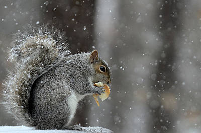 Photograph - Winter Squirrel by Diane Giurco