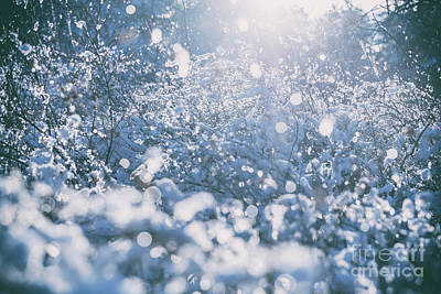 Photograph - Winter Tree, Branches In Snow And Frost Close-up. by Michal Bednarek