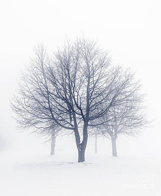 Snowy Photograph - Winter Trees In Fog by Elena Elisseeva