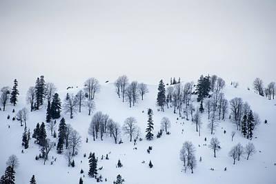 Winter Trees Art Print by Svetlana Sewell