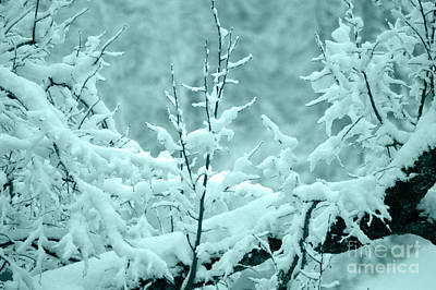 Photograph - Winter Wonderland In Switzerland by Susanne Van Hulst