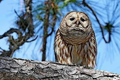 Photograph - Wise Owl by Ira Runyan